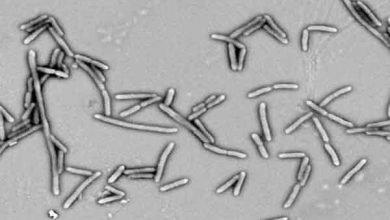 Photo of Bactérias que fermentam fibras melhoram a saúde de pacientes com diabetes tipo 2